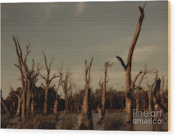 Ghostly Trees Wood Print by Douglas Barnard