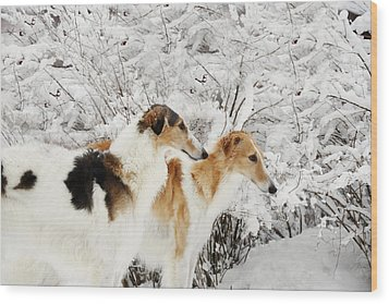 Wood Print featuring the photograph giant Borzoi hounds in winter by Christian Lagereek