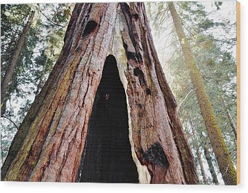 Giant Forest Giant Sequoia Wood Print by Kyle Hanson