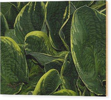 Giant Hosta Closeup Wood Print