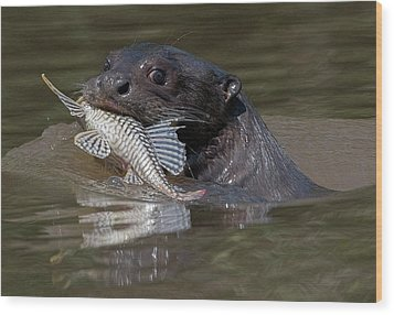 Wood Print featuring the photograph Giant Otter #1 by Wade Aiken