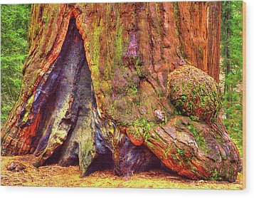 Giant Sequoia Base With Fire Scar Wood Print