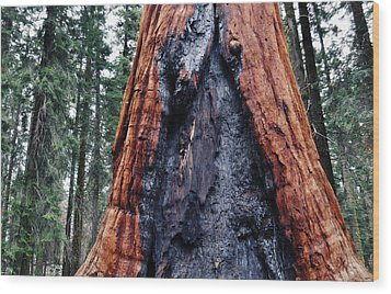 Wood Print featuring the photograph Giant Sequoia by Kyle Hanson