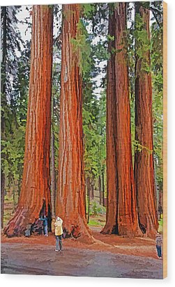 Giant Sequoias Wood Print by Dennis Cox