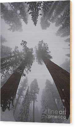 Giant Sequoias Wood Print by Gregory G. Dimijian, M.D.