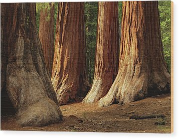 Giant Sequoias, Yosemite National Park Wood Print by Andrew C Mace
