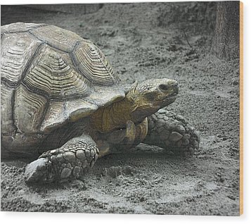 Wood Print featuring the photograph Giant Tortoise by Laura DAddona