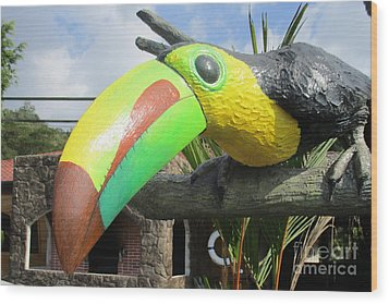 Giant Toucan Wood Print by Randall Weidner