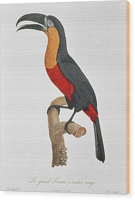 Giant Touraco Wood Print by Jacques Barraband