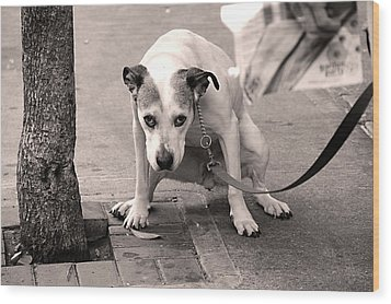 Wood Print featuring the photograph Gimme A Break by JoAnn Lense