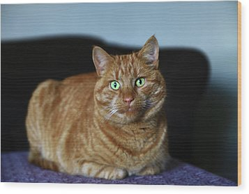 Wood Print featuring the photograph Ginger Marmalade Cat by Nareeta Martin