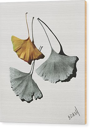Ginkgo Leaves Wood Print