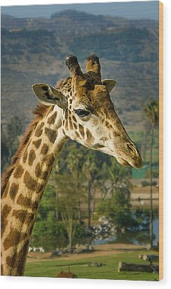 Wood Print featuring the photograph Giraffe by April Reppucci
