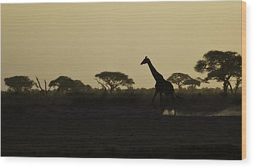 Giraffe At Sunset Wood Print by Marion McCristall