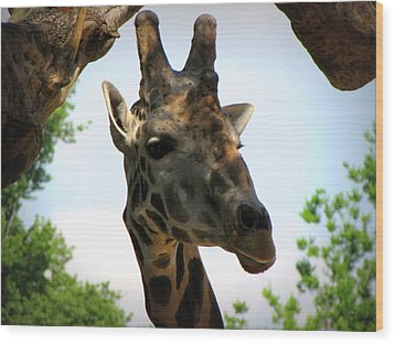 Wood Print featuring the photograph Giraffe by Beth Vincent