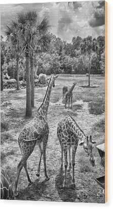 Wood Print featuring the photograph Giraffe Reticulated by Howard Salmon