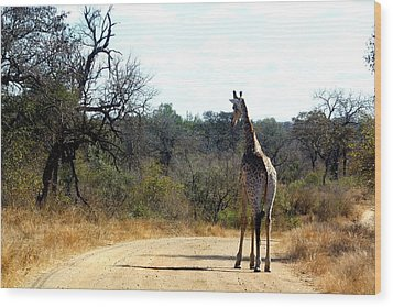 Wood Print featuring the photograph Giraffe by Riana Van Staden