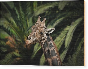 Wood Print featuring the photograph Giraffe  by Roger Mullenhour