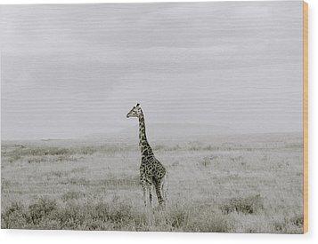 Giraffe Wood Print by Shaun Higson