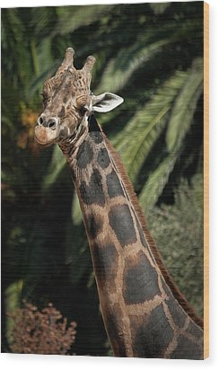 Wood Print featuring the photograph Giraffe Study 2 by Roger Mullenhour
