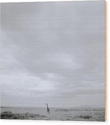 Giraffe Under Big Sky Wood Print by Shaun Higson