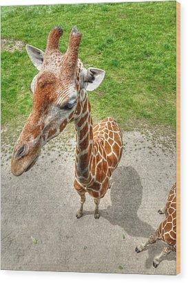 Giraffe's Point Of View Wood Print by Michael Garyet