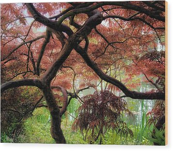 Giverny Gardens Wood Print by Jim Hill