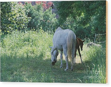 Giverny Mare And Foal Landscape Wood Print by Nadine Rippelmeyer