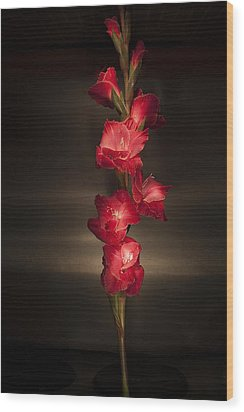 Wood Print featuring the photograph Gladioli_variation#4 by Richard Wiggins