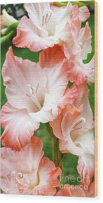 Gladiolus Ruffles  Wood Print