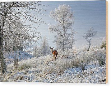 Wood Print featuring the photograph Glen Shiel Misty Winter Deer by Grant Glendinning