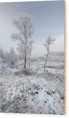 Wood Print featuring the photograph Glen Shiel Misty Winter Trees by Grant Glendinning