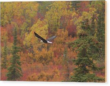 Glide Path Wood Print by Ed Boudreau