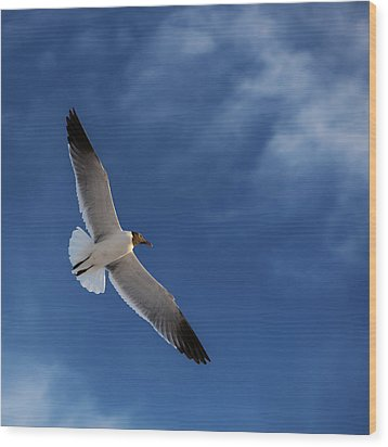 Glider Wood Print by Don Spenner