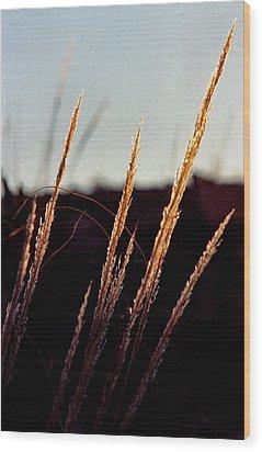 Glistening Grass Wood Print