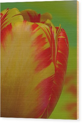 Globe Tulip Wood Print by Juergen Roth