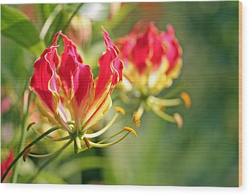 Gloriosa Flame Wood Print