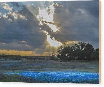 Da211 Glorious Bluebonnet Sunset By Daniel Adams Wood Print