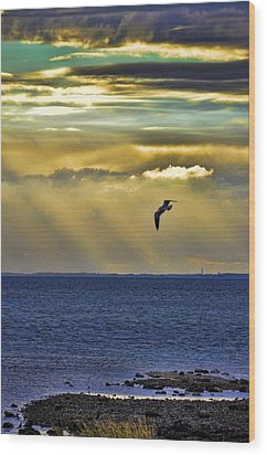 Wood Print featuring the photograph Glorious Evening by Jan Amiss Photography