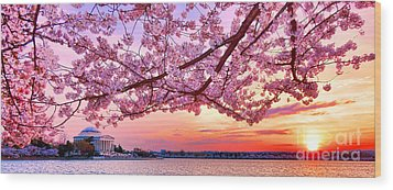 Glorious Sunset Over Cherry Tree At The Jefferson Memorial  Wood Print by Olivier Le Queinec