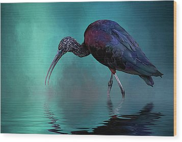 Glossy Ibis Looking For Breakfast Wood Print by Cyndy Doty