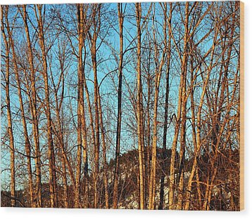 Wood Print featuring the photograph Glow Of The Setting Sun by Will Borden