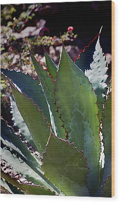 Wood Print featuring the photograph Glowing Agave by Phyllis Denton