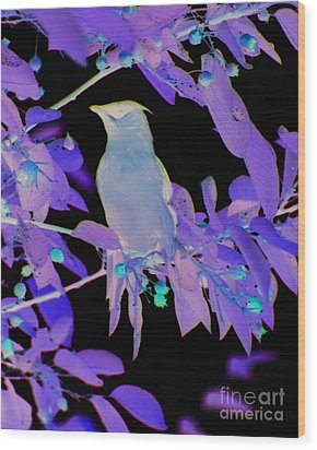 Wood Print featuring the photograph Glowing Cedar Waxwing by Smilin Eyes  Treasures