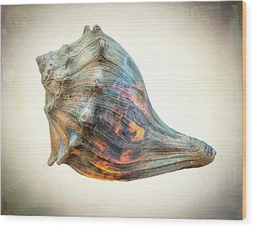 Wood Print featuring the photograph Glowing Conch Shell by Gary Slawsky