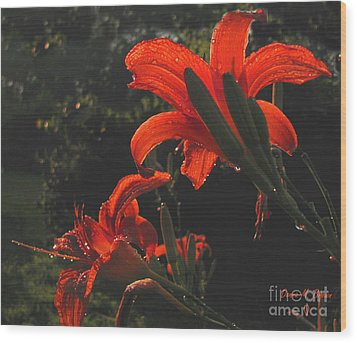 Wood Print featuring the photograph Glowing Day Lilies by Donna Brown