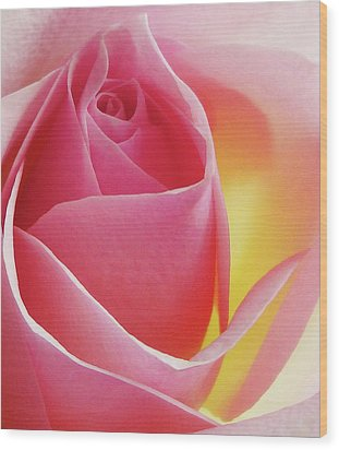 Glowing Pink Rose Wood Print