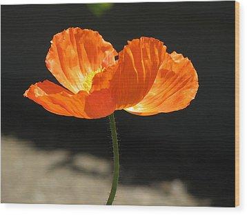 Glowing Poppy Wood Print by Helaine Cummins