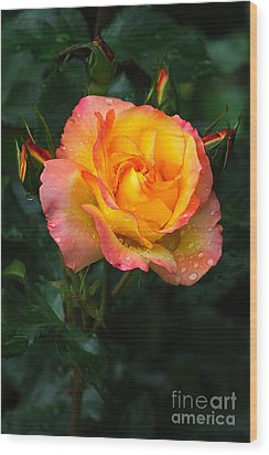 Glowing Rose Wood Print by Edward Sobuta
