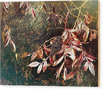 Wood Print featuring the photograph Glowing Sumac With Berries by Bellesouth Studio